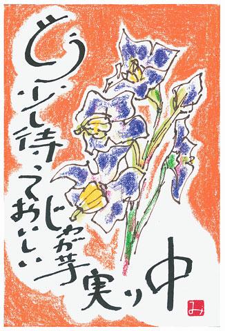 絵手紙の画像「じゃが花」